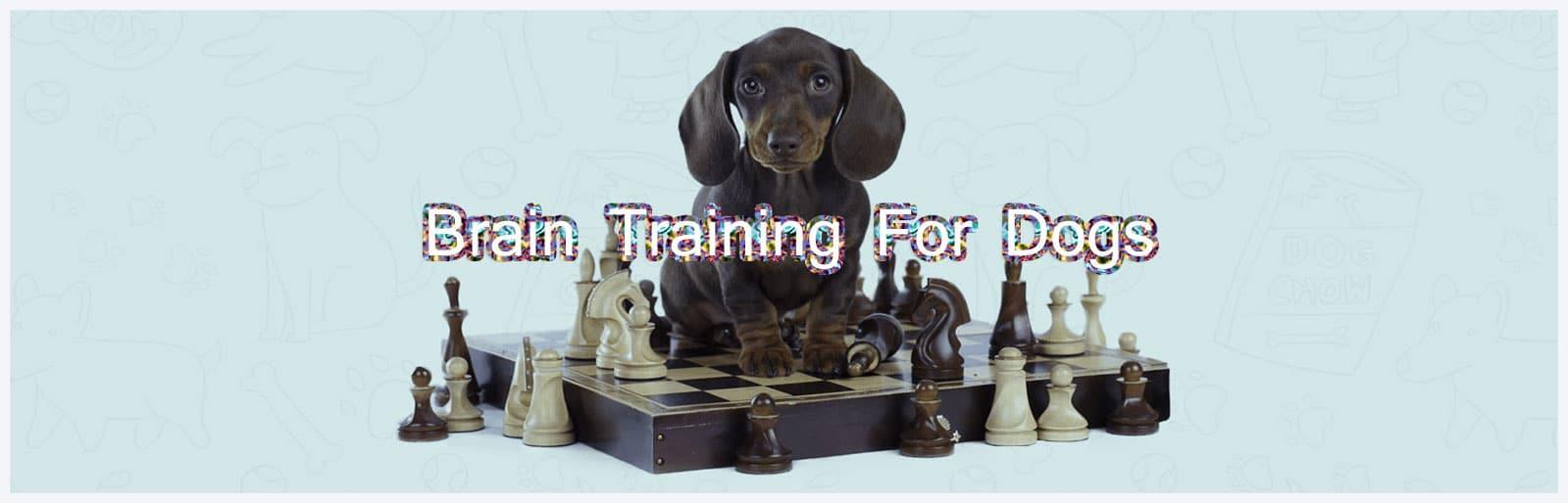 dog-training-header